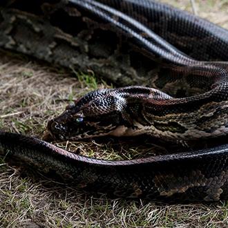 Kígyó a PEOPLE TEAM zöld táborában